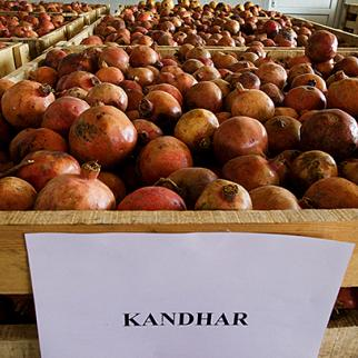 Pomegranates from Kandahar ready for processing at Afghanistan's first juice concentrate factory. Kabul, October 2009. (Photo: Paula Bronstein/Getty Images)